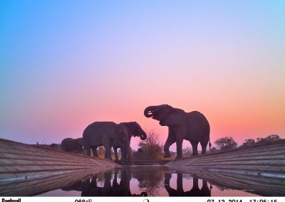 2014 CLASSICAL - Elephant herd drinking sunset1 - Peter Powell - Undisclosed