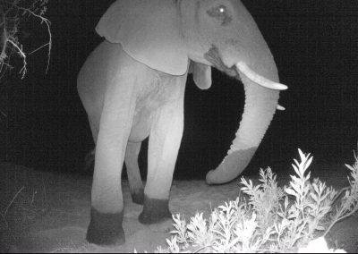 2018 - African elephant - Andre du Toit_1