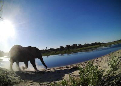 2018 - African elephant - Andre du Toit_2