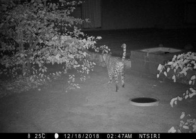 2018 Leopard - Richard Kotze