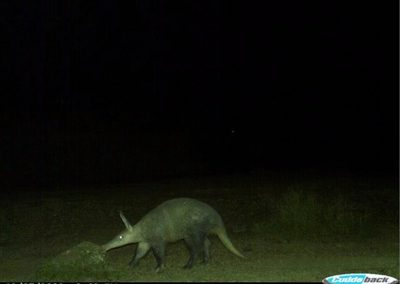 Aardvark 4- Brad Fike - Sam Knott NR