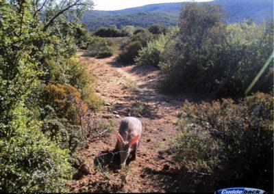 Aardvark - Brad Fike