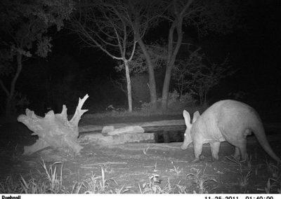 Aardvark - Jacque Arnold