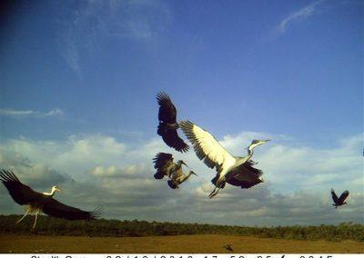 Birds taking off - Cole du Plesis