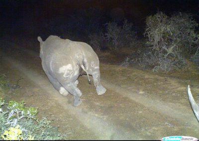 Black Rhino chase - Brad and Mary Fike