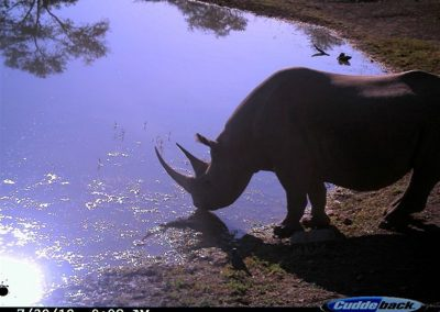 Black Rhino silhouette - Brad and Mary Fike