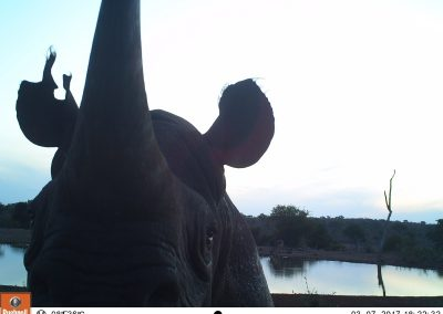Black rhino investigation - LH - Undisclosed