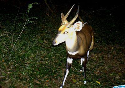 Bushbuck male - Wynand Uys - Limpopo