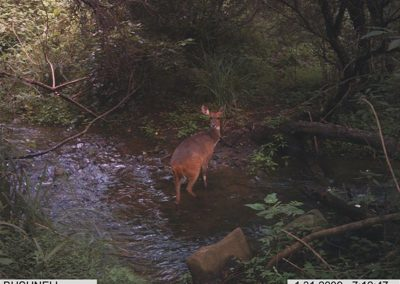 Bushbuck stream - Carl Huchzermeyer crossing