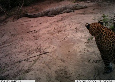 Croc and leopard - Xander Combrink - KZNWildlife