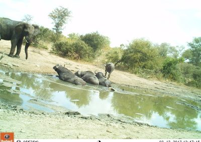 Elephant and buffalo waterhole1 - Leonie Hofstra