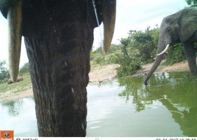 Elephant and rhino at waterhole - Leonie Hofstra