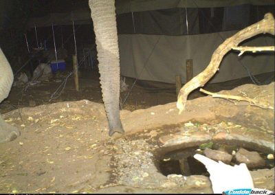 Elephant in camp - Eco Training
