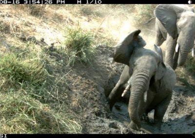 Elephant mud bath1 - Riaan Labuschagne