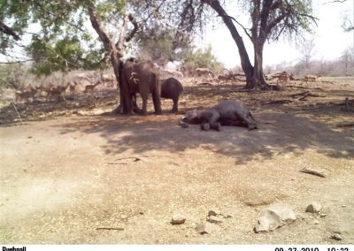 Elephant sleeping3 - Wilderness Safaris