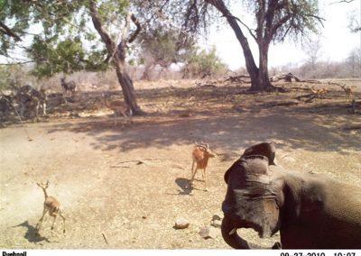 Elephant4 - Wilderness Safaris