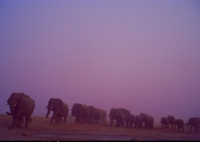 Elephants arriving at waterhole - Anthony Alexander - Zimbabwe