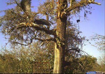 Fish Eagle landing - Byron du Preez