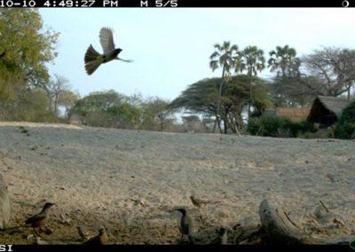 Flight action - Riaan Labuschagne