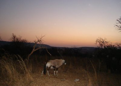 Gemsbok at sunset - Gary Bennetts