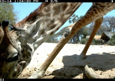 Giraffe drinking - Riaan Labuschagne