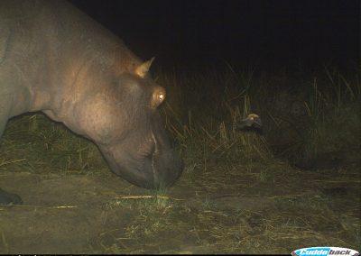 Hippo and bat flying - Richard Mckibbin