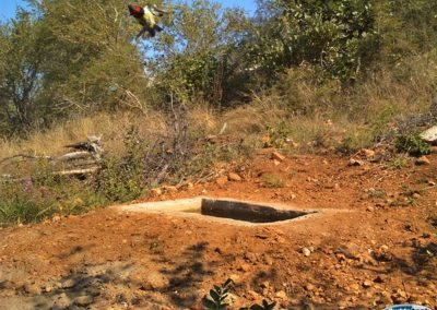 IMPOSSIBLE - Black collared barbet in flight - Wayne Kieswetter