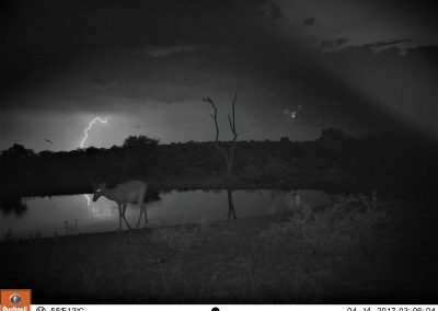 Impala and lightning - Leonie Hofstra
