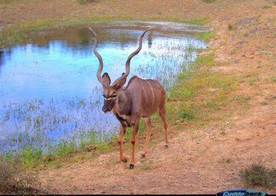 Kudu bull - Brad Fike - Sam Knott NR