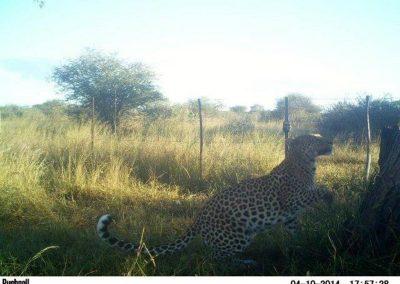 Leopard - Mariska Bijsterbosch - Namibia