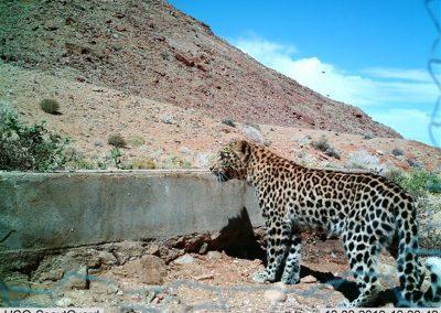 Leopard cub - Sarah Edwards - Namibia