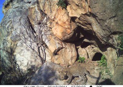 Leopard cub at den - Naan ke se - Namibia