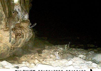 Leopard female and cubs - Scott Ristow - Sanbona