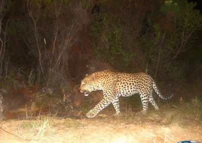 Leopard2 - Victor Breach