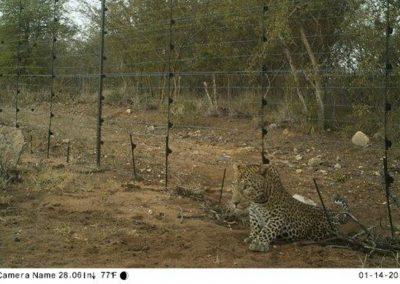 Leopard7 - Villiers Steyn - HWE