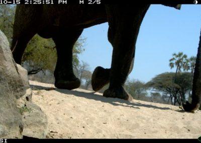 Passing elephant - Riaan Labuschagne