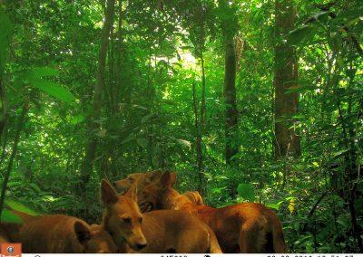 Poachers dogs4 - Craig Widdows - Cameroon