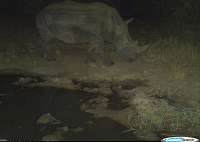 Rhino - CP - Undisclosed