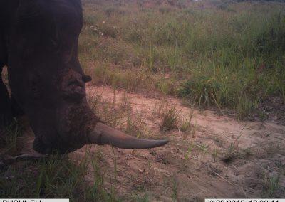 Rhino close2 - RMSLCV - undisclosed