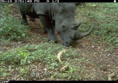 Rhino close4 - RMSLCV - undisclosed