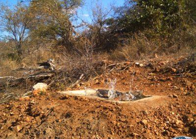 Sharpes grysbok fall in trough1 - Wayne Kieswetter