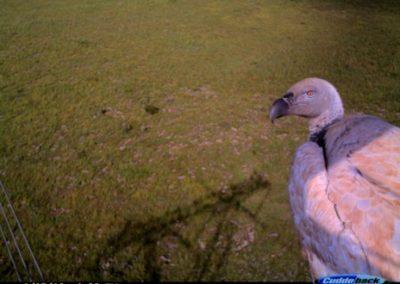 Vultures view - Luke Strugnell - EWT Eskom