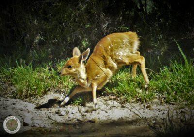 Walker Bay Fynbos Conservancy - Mike Fabricius (12)