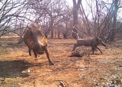 Warthogs-18-sept - Villiers Steyn - HWE