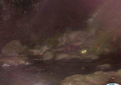 Water mongoose2 - CP - KZN