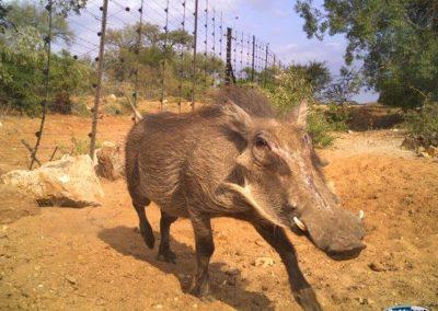 warthog-30-apr - Villiers Steyn - HWE