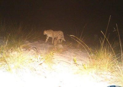 Cheetah4 - National Geographic - Okavango Wilderness Project