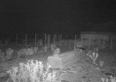 Eagle owl2 - Cobus Horn
