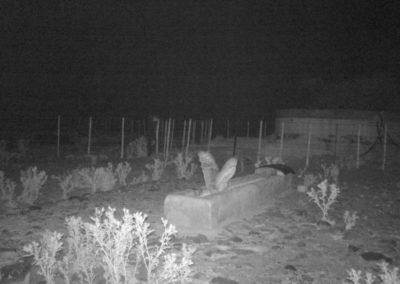 Eagle owl3 - Cobus Horn