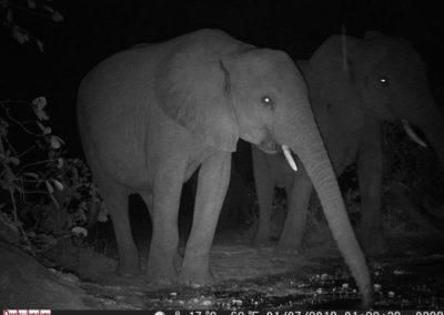 Elephant drinking - Luke Veen - Zambia